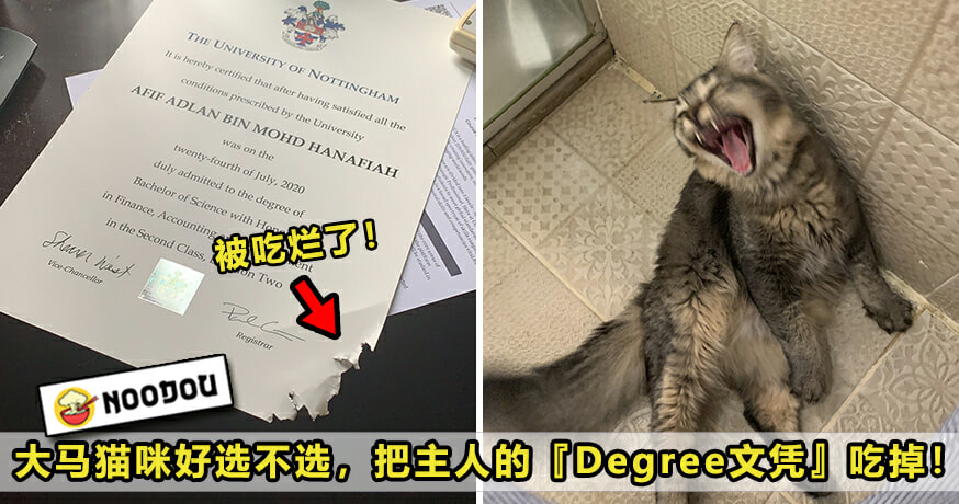 Cat Eat Degree Featured