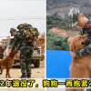 Dog Army Featured