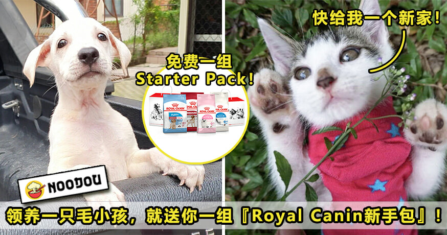 Royal Canin Featured V2