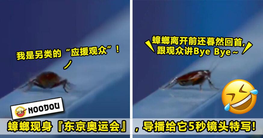 蟑螂现身东京奥运会