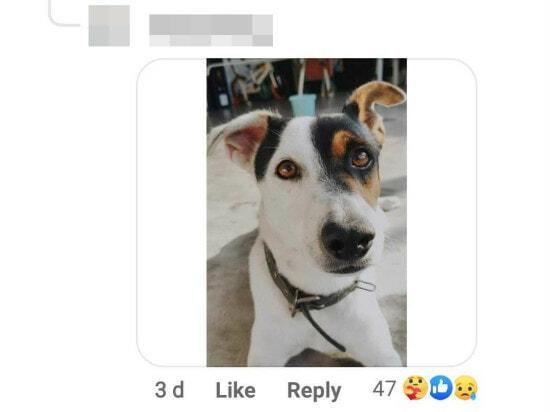 C See Dog 1