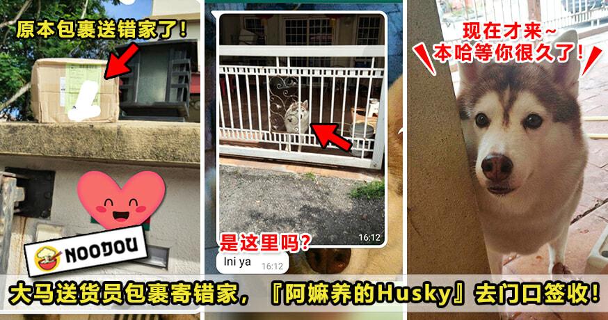 Husky Parcel 2 Featured 2
