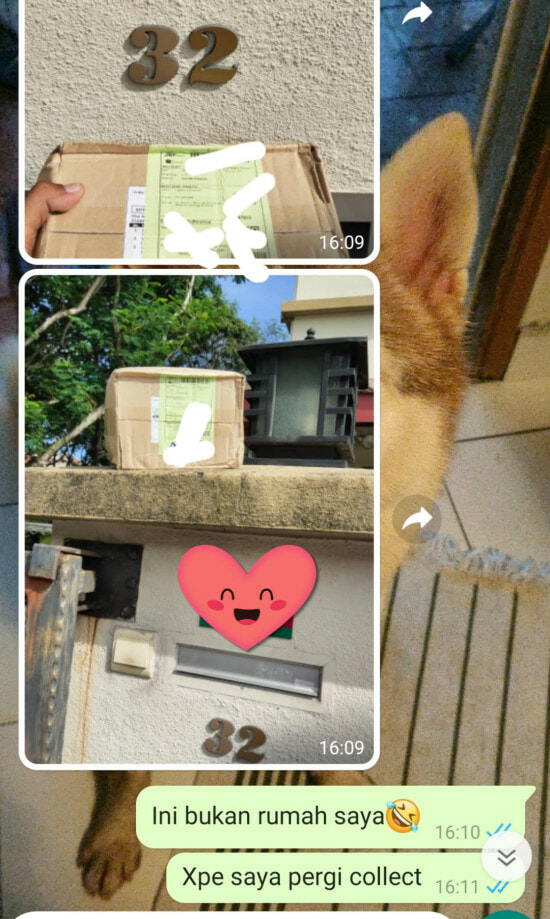 Husky Helps Owner To Get Parcel At Home Behind The Gate 3