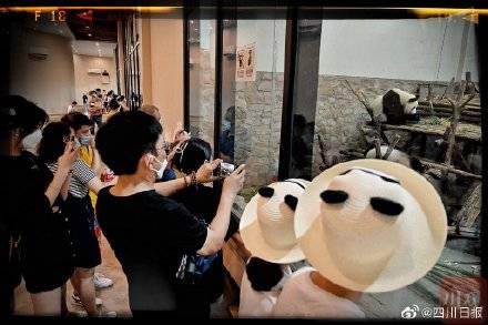 熊猫金宝 02