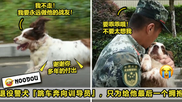 退役警犬Ft Image V7