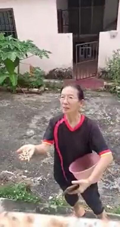 华裔Aunty