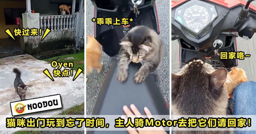 Cat Motor Home Featured