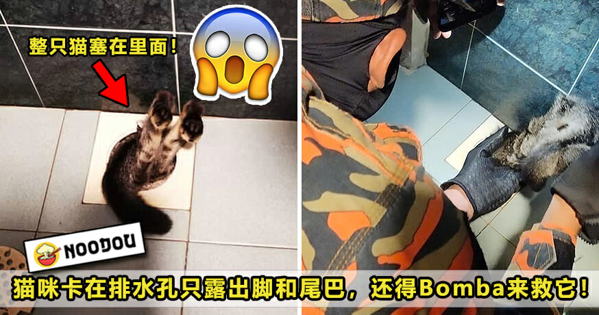 Cat Stuck Toilet Featured